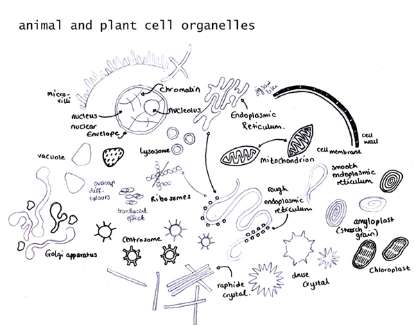 animal and plant cell organelles